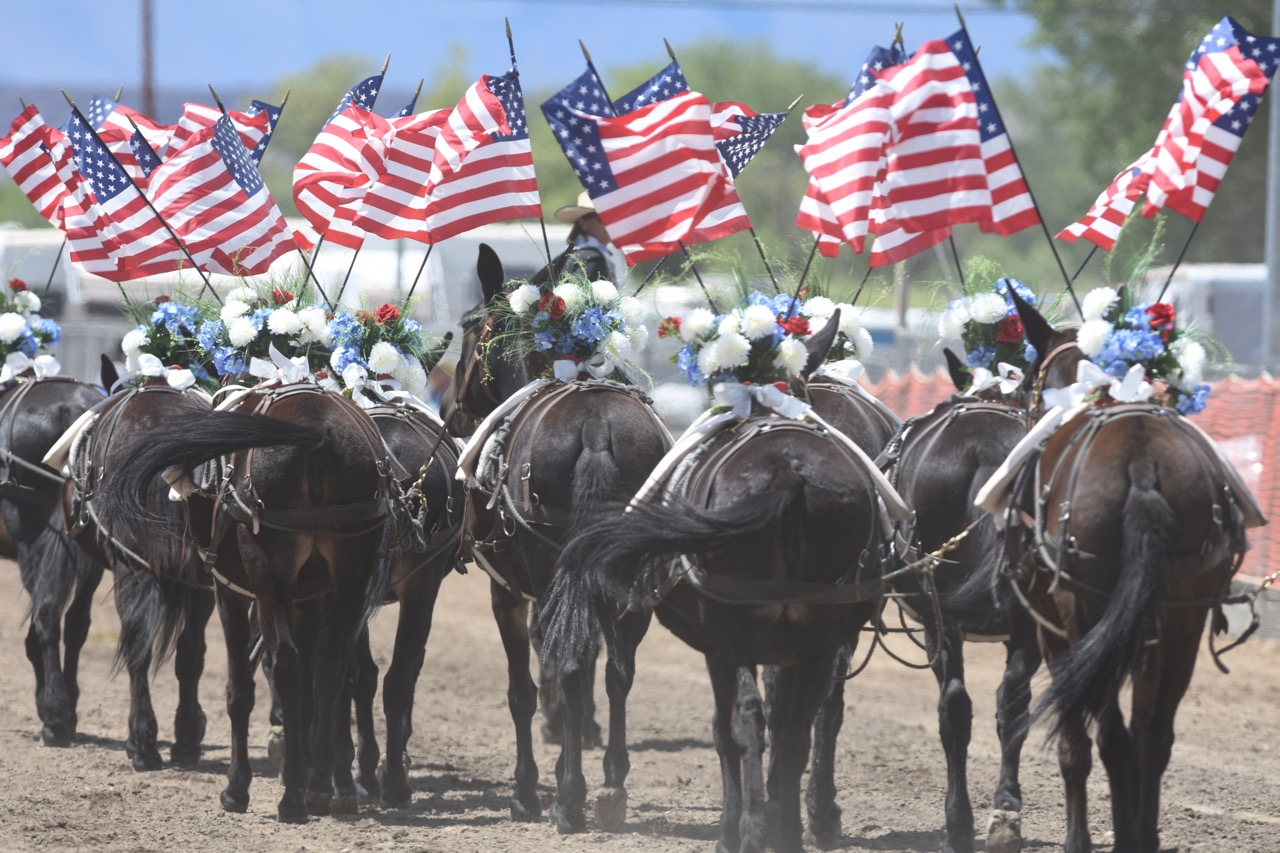 20 Mule Flag Salute – A Memorial Day Tradition