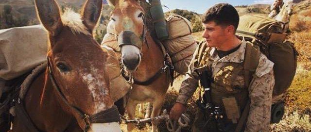 Marine & Mule